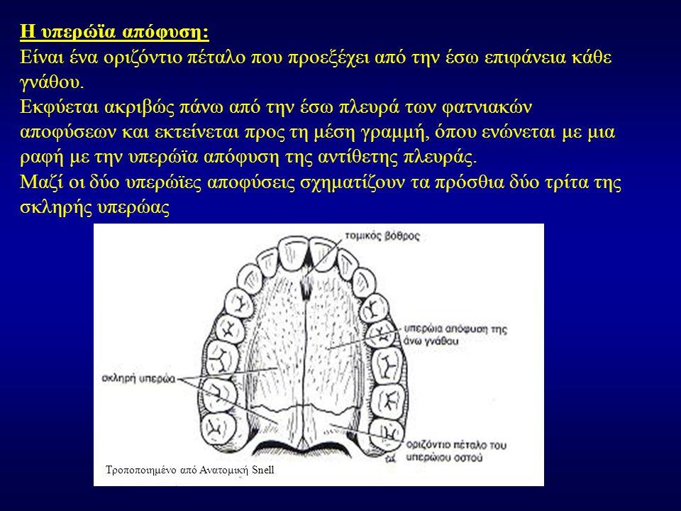 Η υπερώϊα απόφυση: Είναι ένα οριζόντιο πέταλο που προεξέχει από την έσω επιφάνεια κάθε γνάθου. Εκφύεται ακριβώς πάνω από την έσω πλευρά των φατνιακών