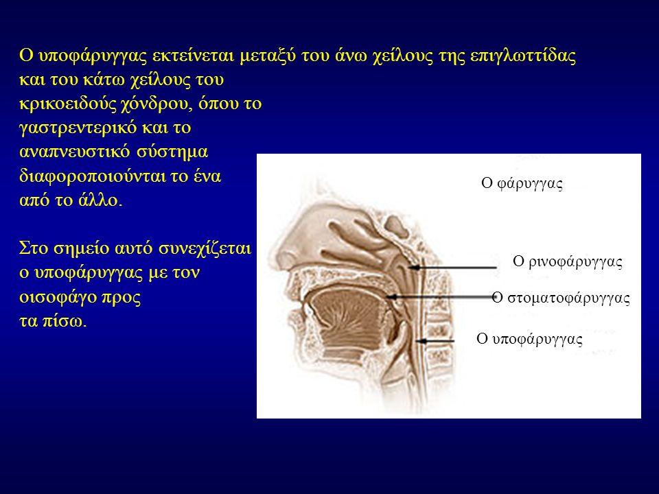 Ο υποφάρυγγας εκτείνεται μεταξύ του άνω χείλους της επιγλωττίδας και του κάτω χείλους του κρικοειδούς χόνδρου, όπου το γαστρεντερικό και το αναπνευστι