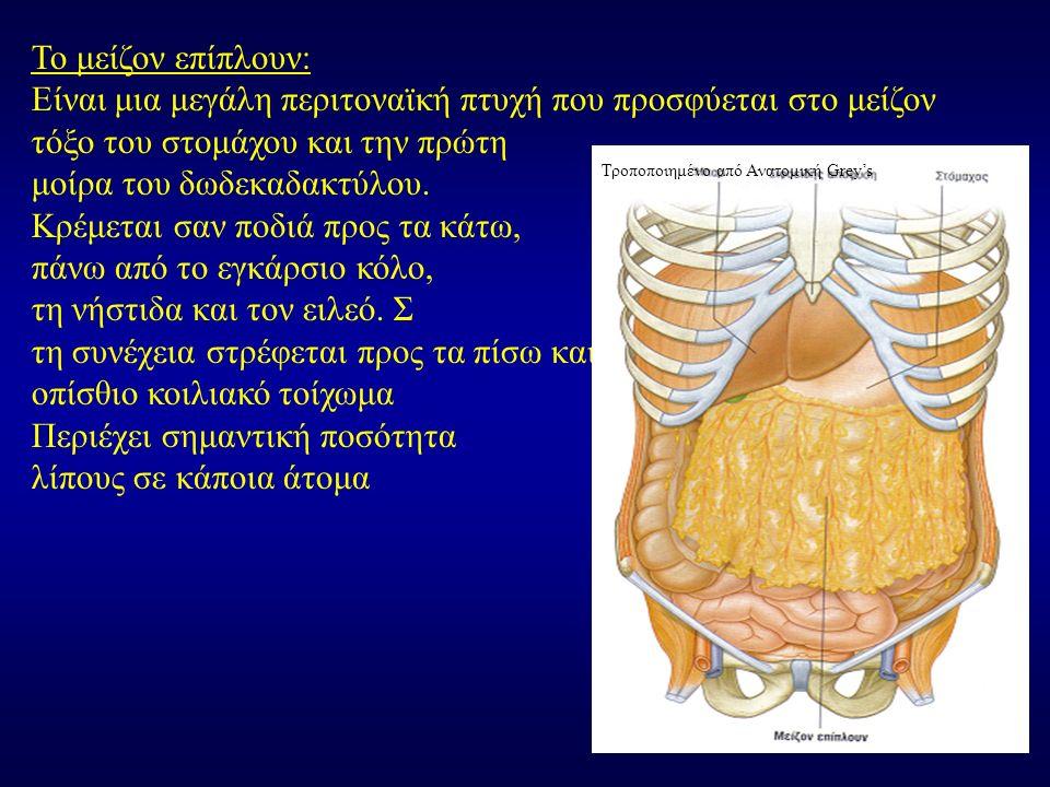 Το μείζον επίπλουν: Είναι μια μεγάλη περιτοναϊκή πτυχή που προσφύεται στο μείζον τόξο του στομάχου και την πρώτη μοίρα του δωδεκαδακτύλου. Κρέμεται σα