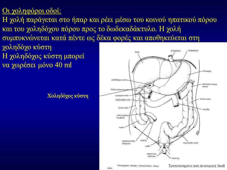 Οι χοληφόροι οδοί: Η χολή παράγεται στο ήπαρ και ρέει μέσω του κοινού ηπατικού πόρου και του χοληδόχου πόρου προς το δωδεκαδάκτυλο. Η χολή συμπυκνώνετ