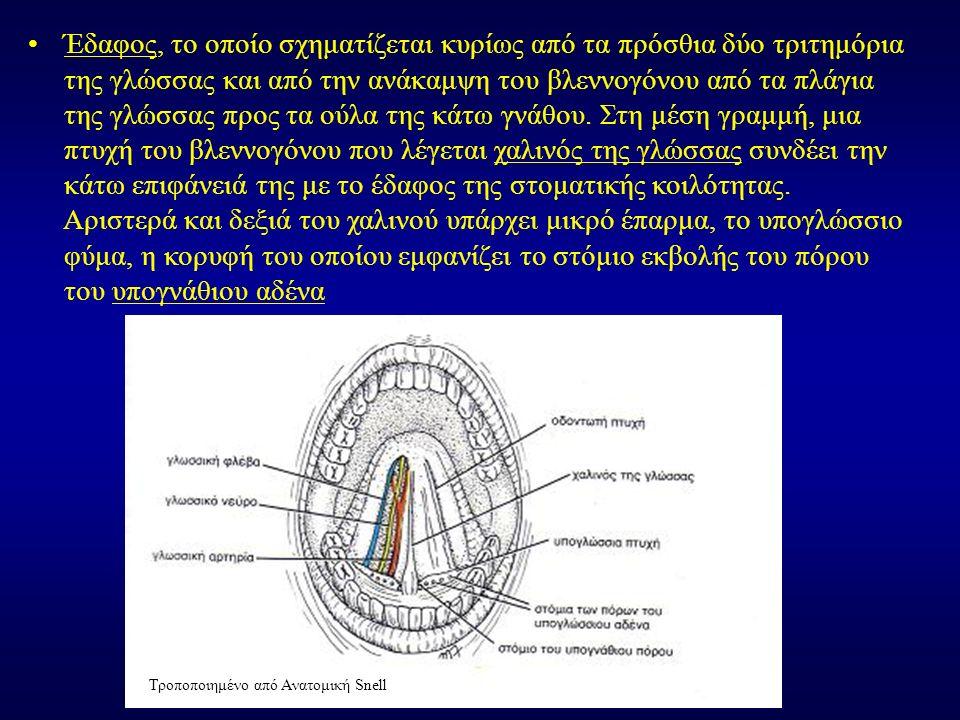 Έδαφος, το οποίο σχηματίζεται κυρίως από τα πρόσθια δύο τριτημόρια της γλώσσας και από την ανάκαμψη του βλεννογόνου από τα πλάγια της γλώσσας προς τα