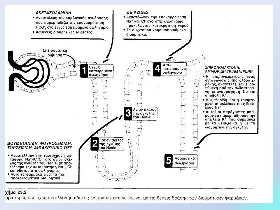 ΔΙΟΥΡΗΤΙΚΑ ΤΗΣ ΑΓΚΥΛΗΣ Ή ΔΙΟΥΡΗΤΙΚΑ ΥΨΗΛΗΣ ΟΡΟΦΗΣ Βουμετανίδη, Φουροσεμίδη, τορσεμίδη, αιθακρυνικό οξύ Έχουν την υψηλότερη αποτελεσματικότητα στην κινητοποίηση Na+ και Cl- από το σώμα και παράγουν μεγάλες ποσότητες ούρων Μηχανισμός  Μηχανισμός δράσης  αναστέλλουν την ταυτόχρονη μεταφορά Na+/ K+/Cl- από την ενδοαυλική μεμβράνη του ανιόντος σκέλους της αγκύλης του Henle με αποτέλεσμα η επαναρρόφηση Na+, K+, και Cl- να ελαττώνεται Φαρμακοκινητική: Φαρμακοκινητική: χορηγούνται από το στόμα ή παρεντερικά, έχουν μικρή διάρκεια δράσης (4 ώρες) και απεκκρίνονται στα κόπρανα Δράσεις  Αυξάνουν την ποσότητα ασβεστίου στα ούρα, την σύνθεση προσταγλανδίνών, ελαττώνουν την νεφρική αγγειακή αντίσταση και αυξάνουν τη νεφρική αιματική ροή Θεραπευτικές χρήσεις Θεραπευτικές χρήσεις οξύ πνευμονικό οίδημα από συμφορητική καρδιακή ανεπάρκεια, υπερασβεστιαιμία Ανεπιθύμητες ενέργειες Ανεπιθύμητες ενέργειες τοξικότητα, υπερουριχαιμία, υπόταση, καταπληξία καρδιακές αρρυθμίες, υποκαλιαιμία, υπομαγνησαιμία
