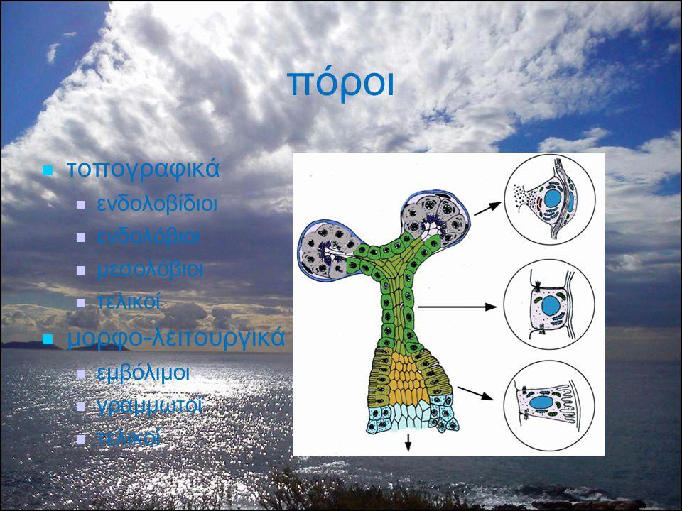 πόροι τοπογραφικά ενδολοβίδιοι ενδολόβιοι μεσολόβιοι τελικοί μορφο-λειτουργικά εμβόλιμοι γραμμωτοί τελικοί