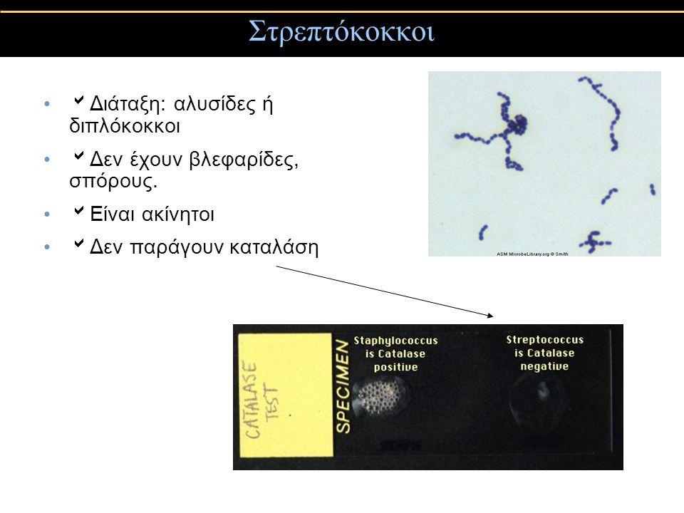 Στρεπτόκοκκοι  Διάταξη: αλυσίδες ή διπλόκοκκοι  Δεν έχουν βλεφαρίδες, σπόρους.  Είναι ακίνητοι  Δεν παράγουν καταλάση