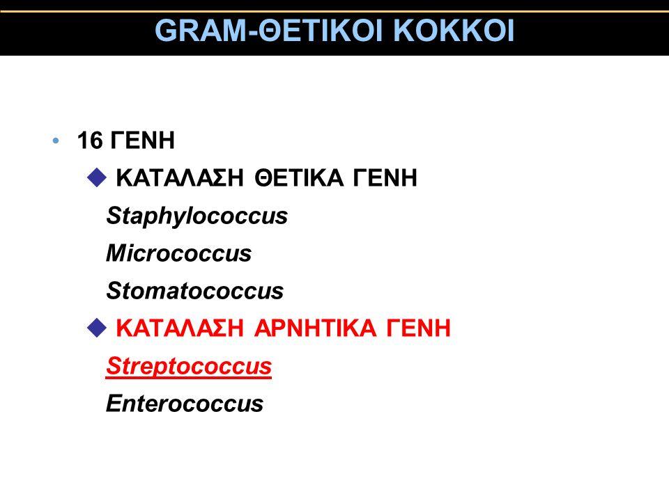 GRAM-ΘΕΤΙΚΟΙ ΚΟΚΚΟΙ 16 ΓΕΝΗ u ΚΑΤΑΛΑΣΗ ΘΕΤΙΚΑ ΓΕΝΗ Staphylococcus Micrococcus Stomatococcus u KAΤΑΛΑΣΗ ΑΡΝΗΤΙΚΑ ΓΕΝΗ Streptococcus Enterococcus