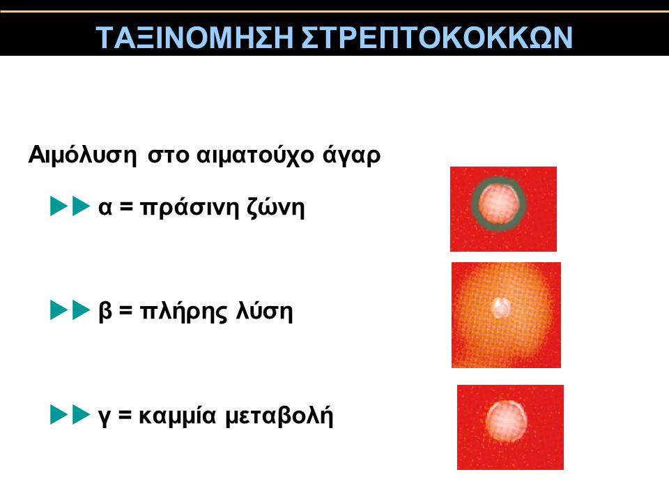 ΤΑΞΙΝΟΜΗΣΗ ΣΤΡΕΠΤΟΚΟΚΚΩΝ Aιμόλυση στο αιματούχο άγαρ  α = πράσινη ζώνη  β = πλήρης λύση  γ = καμμία μεταβολή