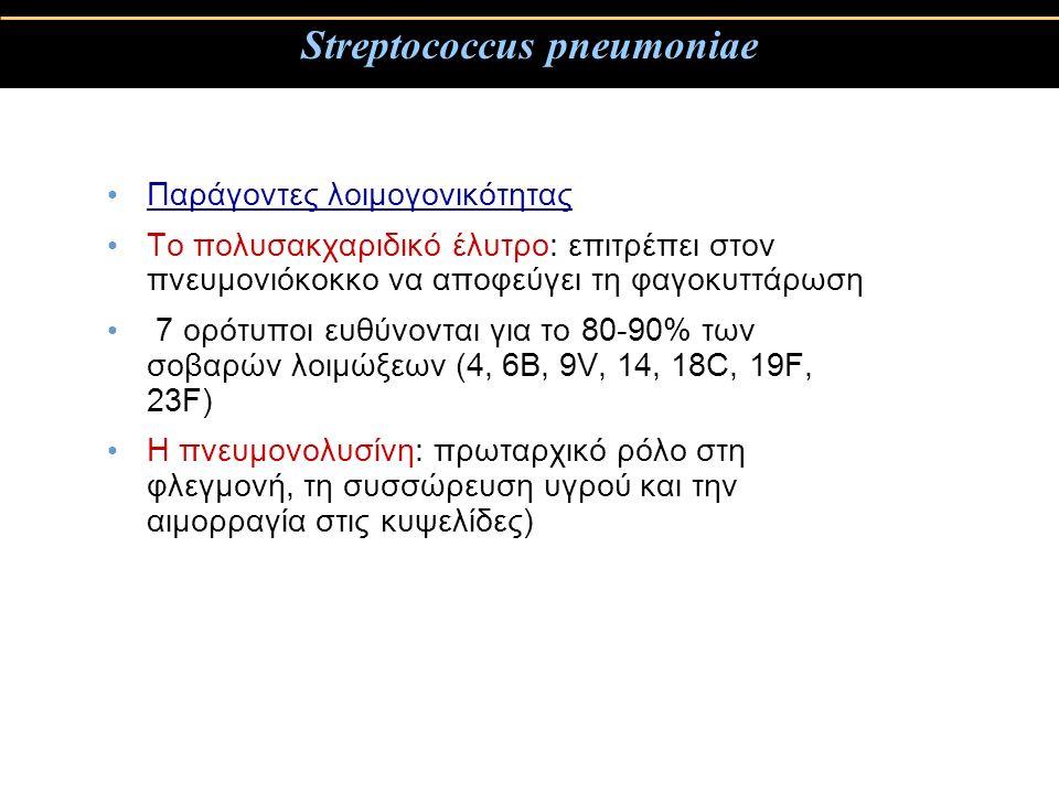 Streptococcus pneumoniae Παράγοντες λοιμογονικότητας Το πολυσακχαριδικό έλυτρο: επιτρέπει στον πνευμονιόκοκκο να αποφεύγει τη φαγοκυττάρωση 7 ορότυποι