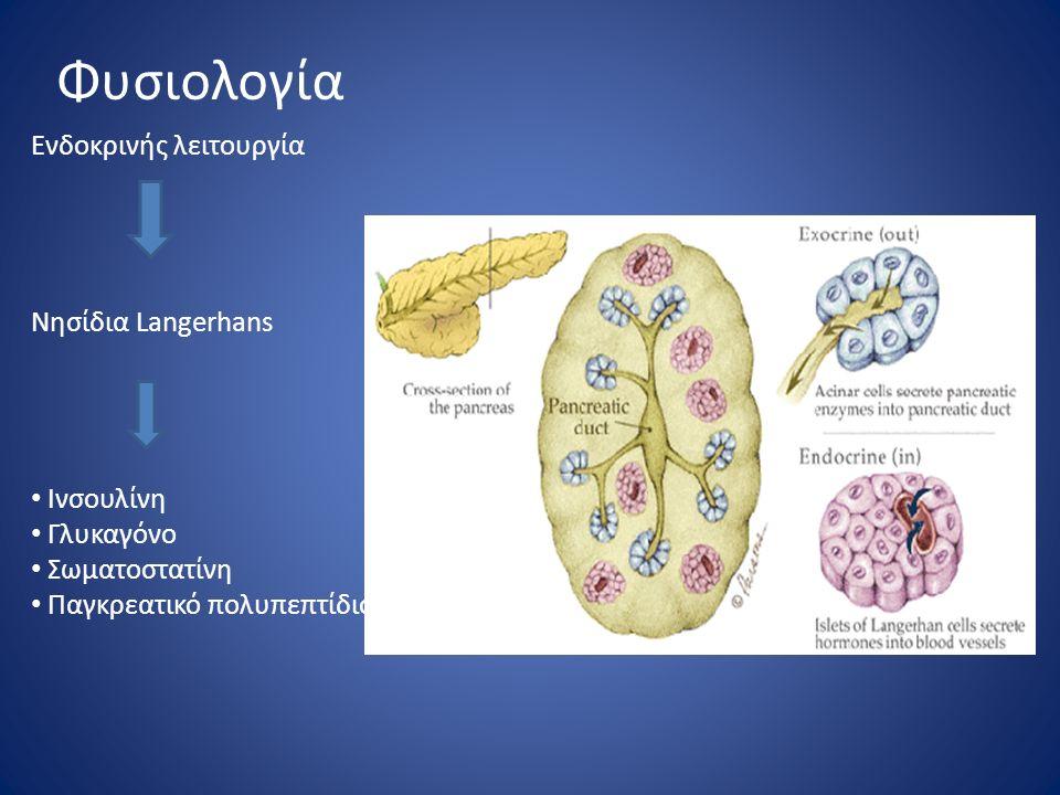 Φυσιολογία Ενδοκρινής λειτουργία Νησίδια Langerhans Ινσουλίνη Γλυκαγόνο Σωματοστατίνη Παγκρεατικό πολυπεπτίδιο