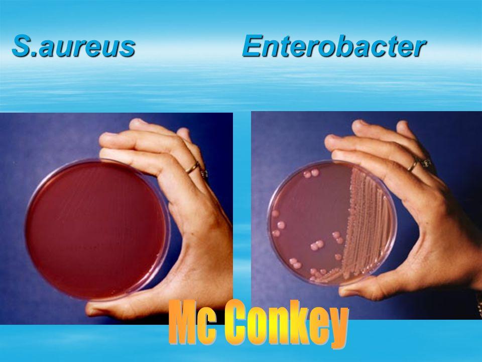 S.aureus Enterobacter