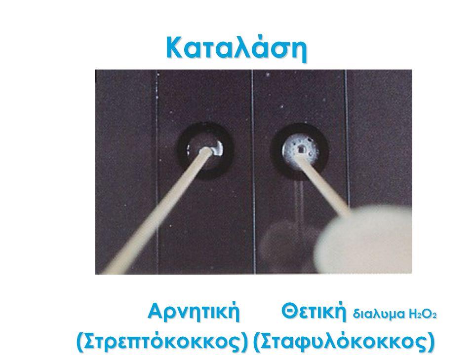 Καταλάση Αρνητική Θετική διαλυμα Η 2 Ο 2 Αρνητική Θετική διαλυμα Η 2 Ο 2 (Στρεπτόκοκκος) (Σταφυλόκοκκος)