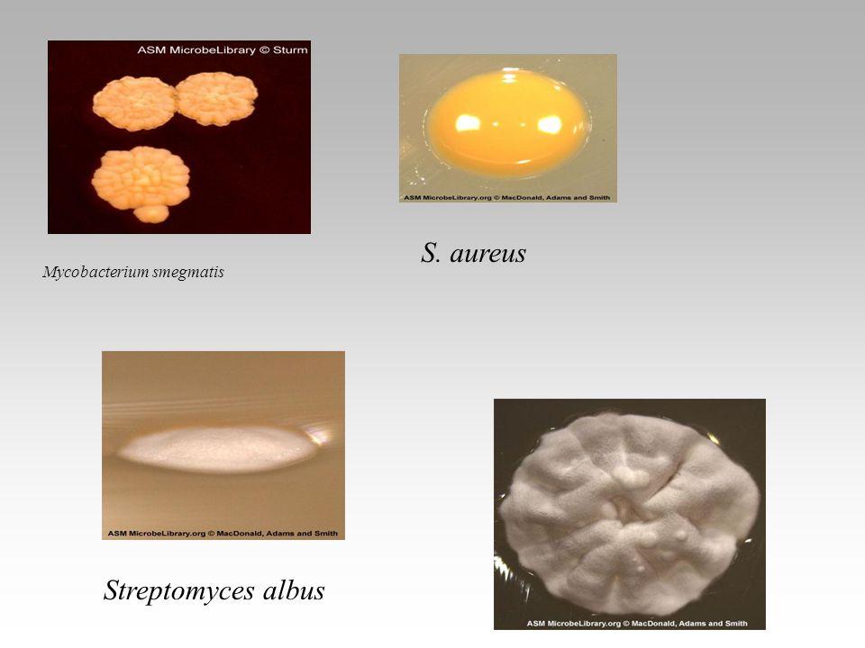 Mycobacterium smegmatis S. aureus Streptomyces albus Lactobacillus
