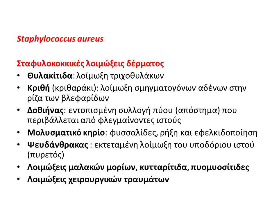 Staphylococcus aureus Σταφυλοκοκκικές λοιμώξεις δέρματος Θυλακίτιδα: λοίμωξη τριχοθυλάκων Κριθή (κριθαράκι): λοίμωξη σμηγματογόνων αδένων στην ρίζα τω