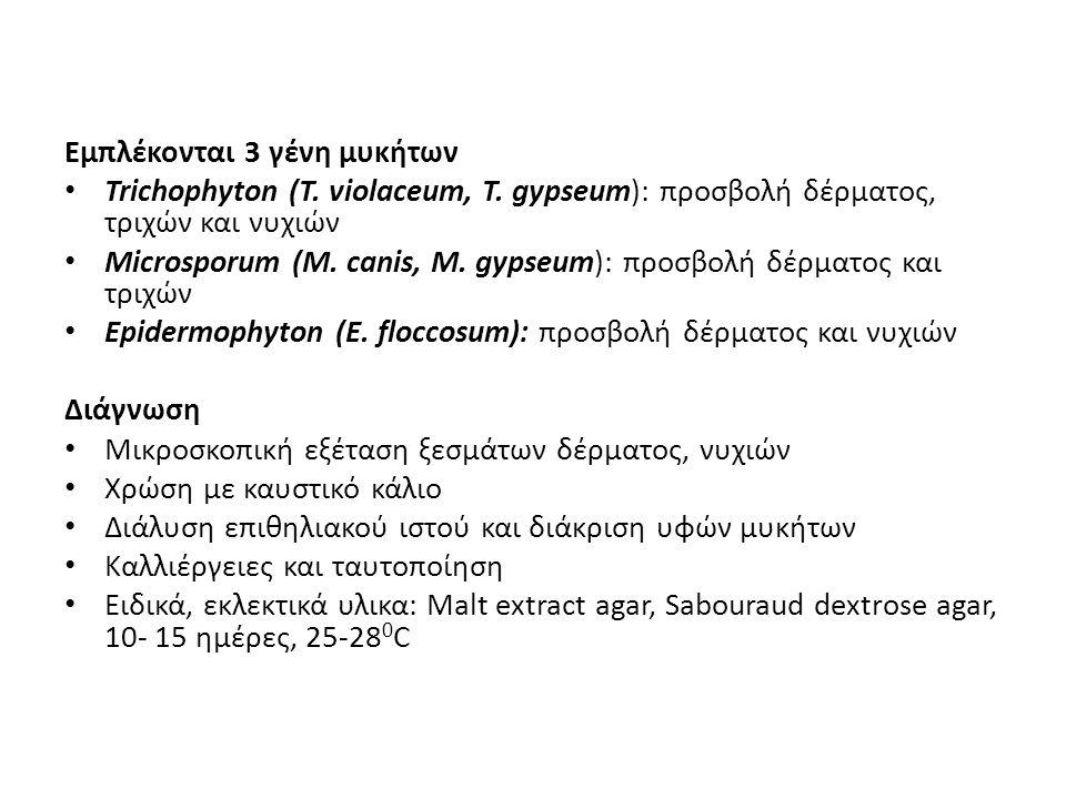 Εμπλέκονται 3 γένη μυκήτων Trichophyton (T. violaceum, T. gypseum): προσβολή δέρματος, τριχών και νυχιών Microsporum (M. canis, M. gypseum): προσβολή