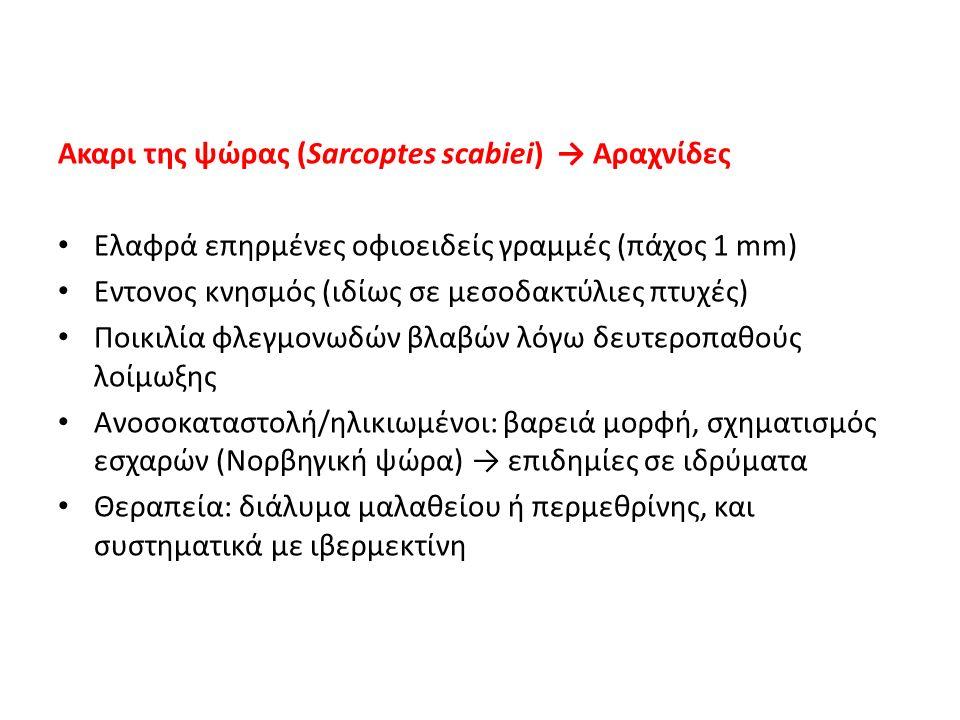 Ακαρι της ψώρας (Sarcoptes scabiei) → Αραχνίδες Ελαφρά επηρμένες οφιοειδείς γραμμές (πάχος 1 mm) Εντονος κνησμός (ιδίως σε μεσοδακτύλιες πτυχές) Ποικι