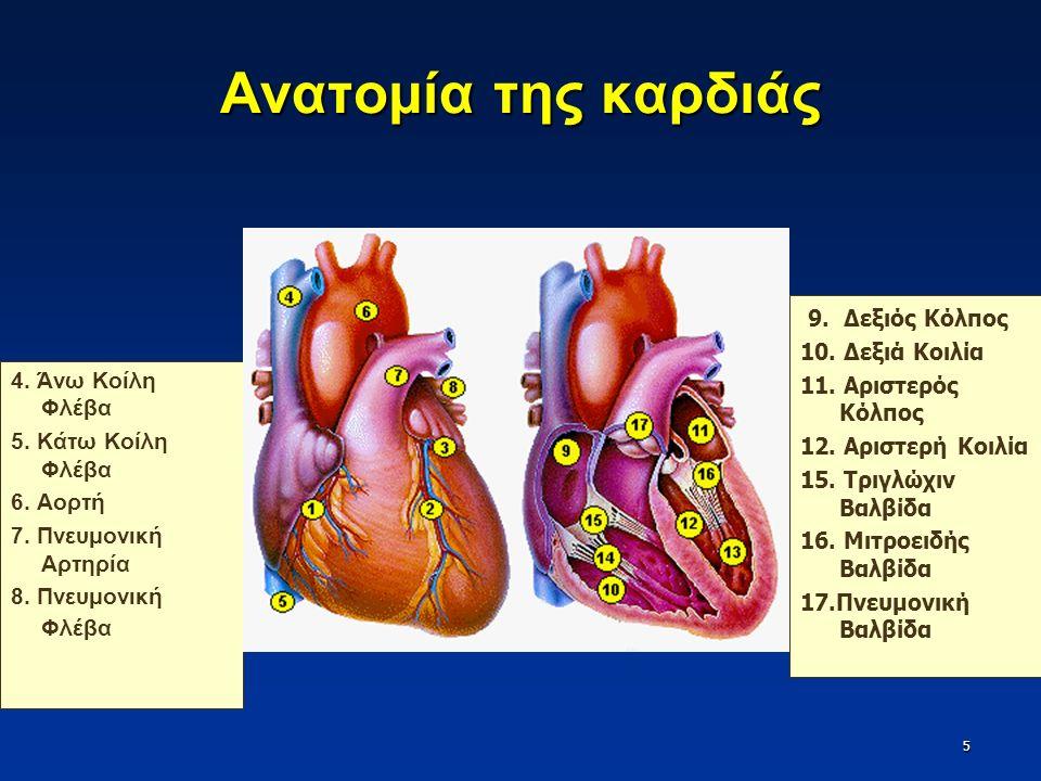 Οι βαλβίδες της καρδιάς 6 Τριγλώχιν Βαλβίδα Δεξιός κόλπος και Δεξιά κοιλία Μιτροειδής Βαλβίδα Αριστερός κόλπος και Αριστερή κοιλία Βαλβίδα Πνευμονικής Αρτηρίας Δεξιά κοιλία και Πνευμονική Αρτηρία Αορτική Βαλβίδα Αριστερή κοιλία και Αορτή Κολποκοιλιακές Βαλβίδες Μηνοειδείς Βαλβίδες