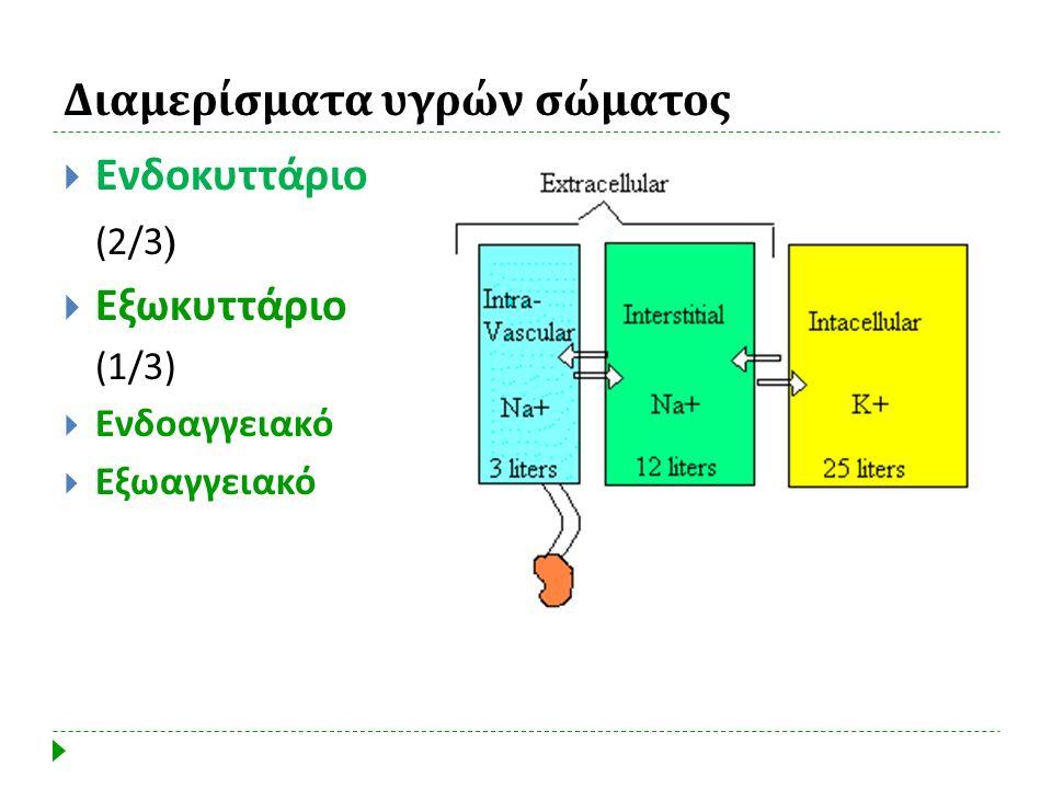 Διαμερίσματα υγρών σώματος  Ενδοκυττάριο (2/3)  Εξωκυττάριο (1/3)  Ενδοαγγειακό  Εξωαγγειακό