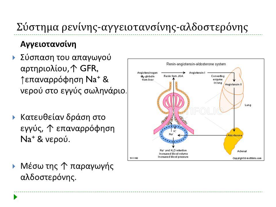 Σύστημα ρενίνης - αγγειοτανσίνης - αλδοστερόνης Αγγειοτανσίνη  Σύσπαση του απαγωγού αρτηριολίου, ↑ GFR, ↑ επαναρρόφηση Na + & νερού στο εγγύς σωληνάρ