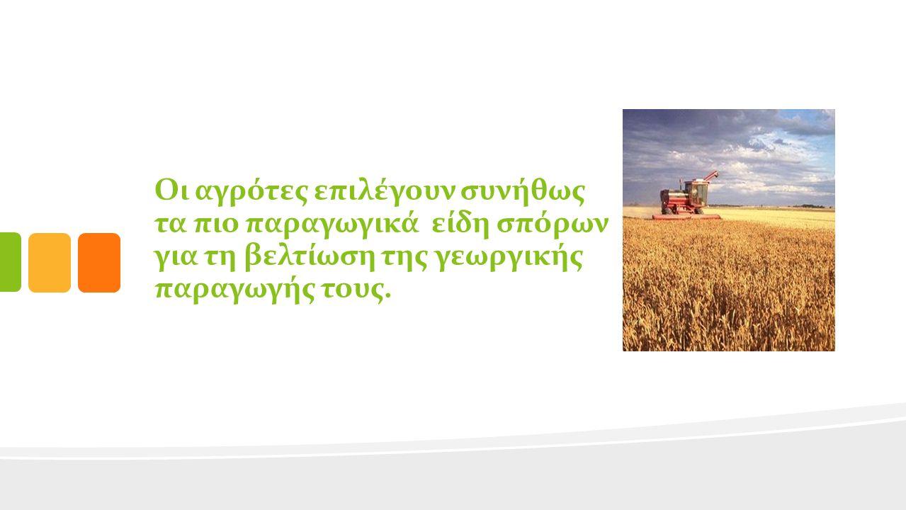 Οι αγρότες επιλέγουν συνήθως τα πιο παραγωγικά είδη σπόρων για τη βελτίωση της γεωργικής παραγωγής τους.