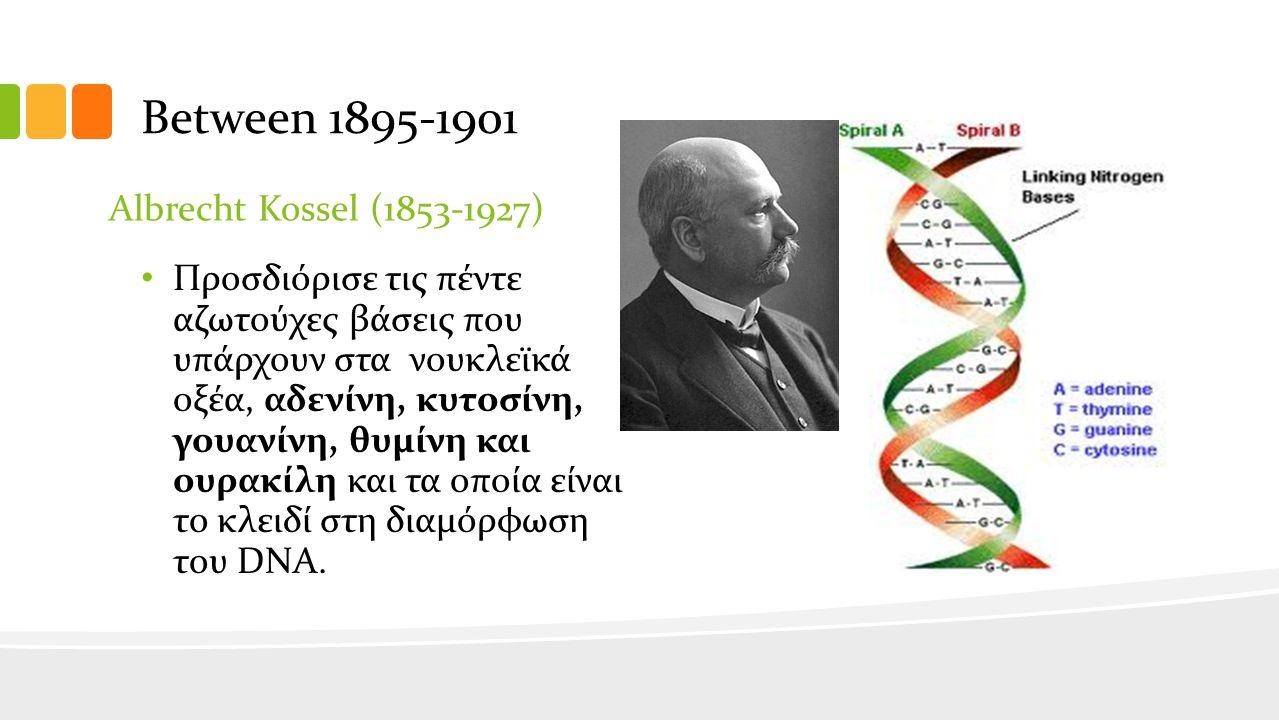 Between 1895-1901 Albrecht Kossel (1853-1927) Προσδιόρισε τις πέντε αζωτούχες βάσεις που υπάρχουν στα νουκλεϊκά οξέα, αδενίνη, κυτοσίνη, γουανίνη, θυμίνη και ουρακίλη και τα οποία είναι το κλειδί στη διαμόρφωση του DNA.