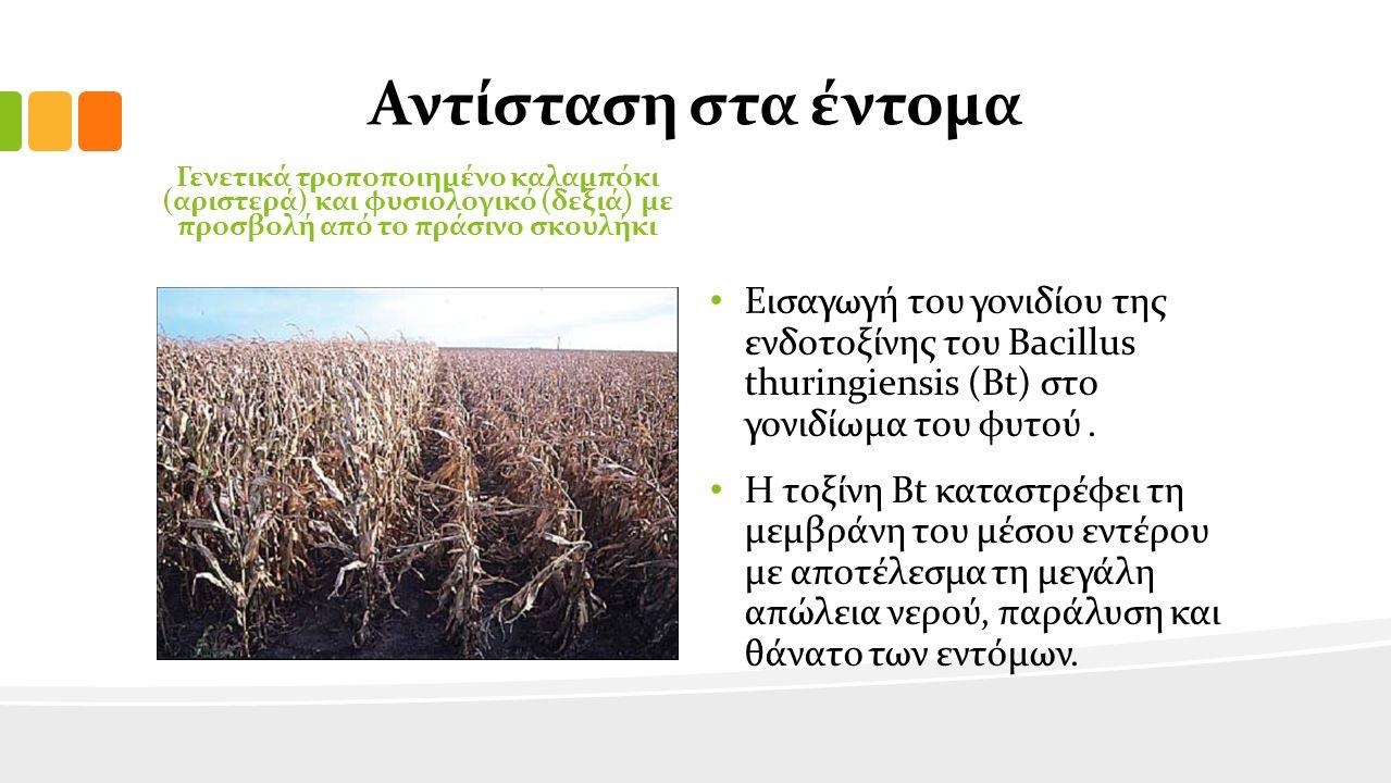 Πλεονεκτήματα για τους ΓΤΟ Μειώνει τη χρήση των φυτοφαρμάκων και άλλων τοξικών χημικών ουσιών Σήμερα, ένα από τα μεγαλύτερα προβλήματα για το περιβάλλον και την ανθρώπινη υγεία είναι η μεγάλη και αλόγιστη χρήση των φυτοφαρμάκων.