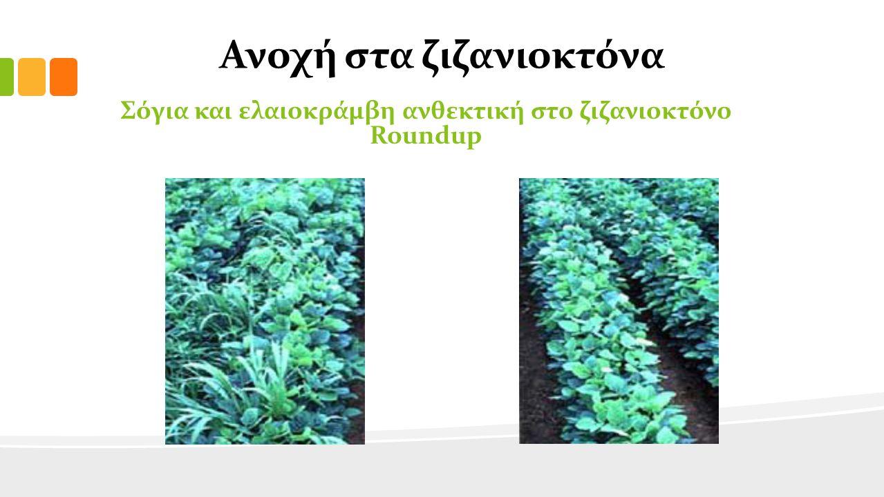 Ανοχή στα ζιζανιοκτόνα Σόγια και ελαιοκράμβη ανθεκτική στο ζιζανιοκτόνο Roundup