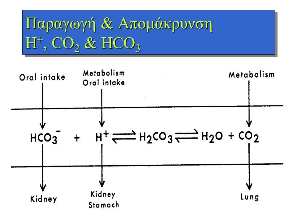 Παραγωγή & Απομάκρυνση H +, CO 2 & HCO 3