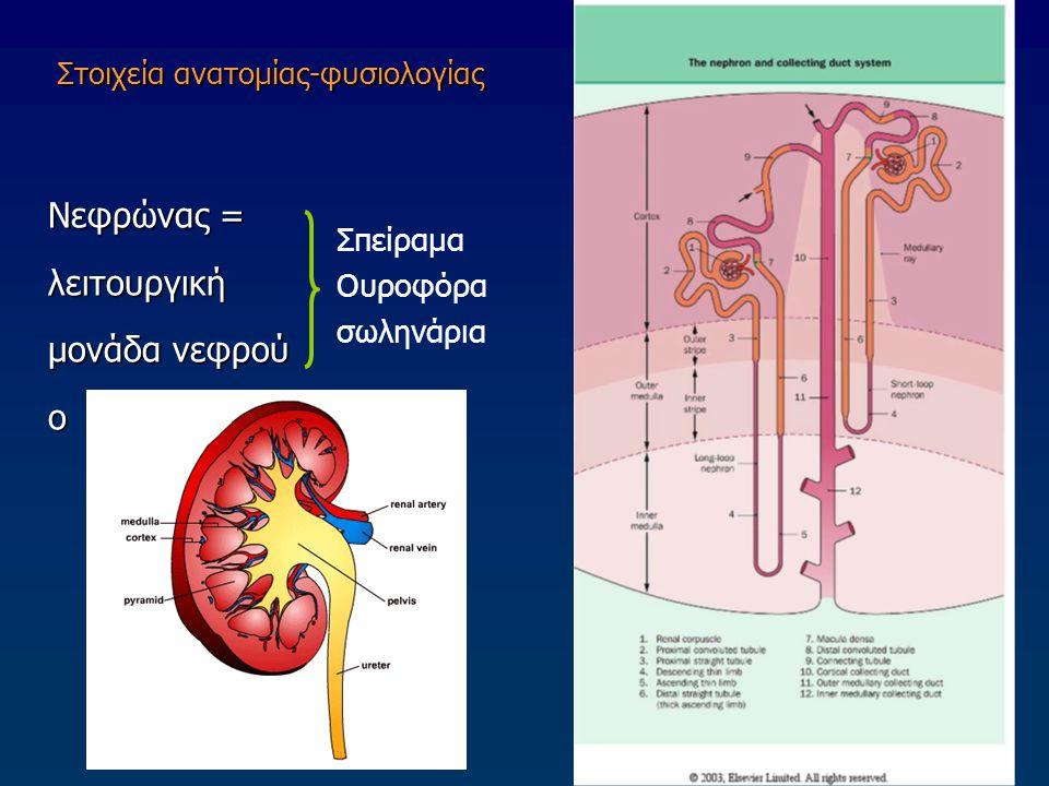 Στοιχεία ανατομίας-φυσιολογίας Νεφρώνας = λειτουργική μονάδα νεφρού ο Σπείραμα Ουροφόρα σωληνάρια