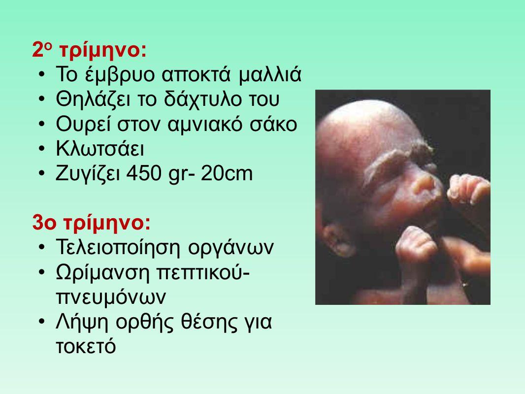2 ο τρίμηνο: Το έμβρυο αποκτά μαλλιά Θηλάζει το δάχτυλο του Ουρεί στον αμνιακό σάκο Κλωτσάει Ζυγίζει 450 gr- 20cm 3o τρίμηνο: Τελειοποίηση οργάνων Ωρί