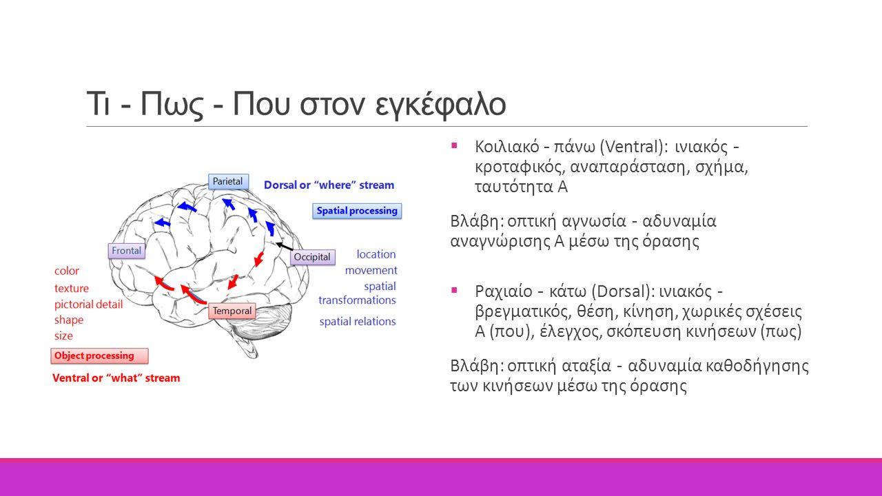 Τι - Πως - Που στον εγκέφαλο  Κοιλιακό - πάνω (Ventral): ινιακός - κροταφικός, αναπαράσταση, σχήμα, ταυτότητα Α Βλάβη: οπτική αγνωσία - αδυναμία αναγ