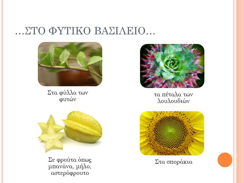 …ΣΤΟ ΦΥΤΙΚΟ ΒΑΣΙΛΕΙΟ… Στα φύλλα των φυτών τα πέταλα των λουλουδιών Στα σποράκια Σε φρούτα όπως μπανάνα, μήλο, αστερόφρουτο