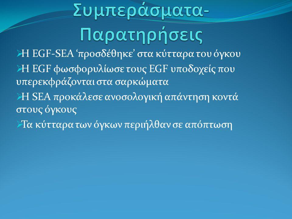  Η EGF-SEA 'προσδέθηκε' στα κύτταρα του όγκου  Η EGF φωσφορυλίωσε τους EGF υποδοχείς που υπερεκφράζονται στα σαρκώματα  Η SEA προκάλεσε ανοσολογική
