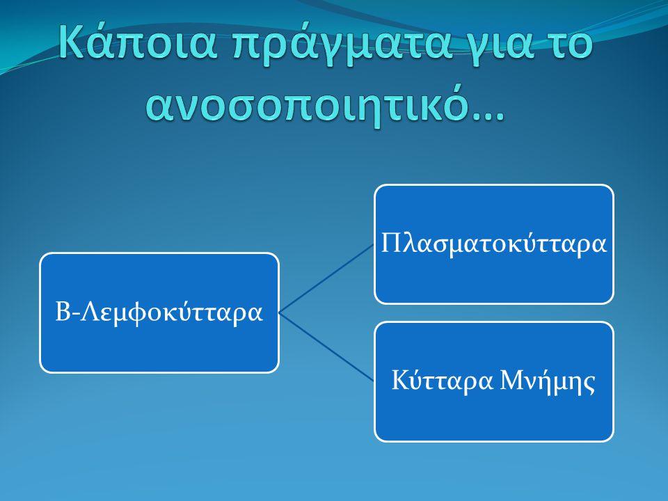 Β-ΛεμφοκύτταραΠλασματοκύτταραΚύτταρα Μνήμης
