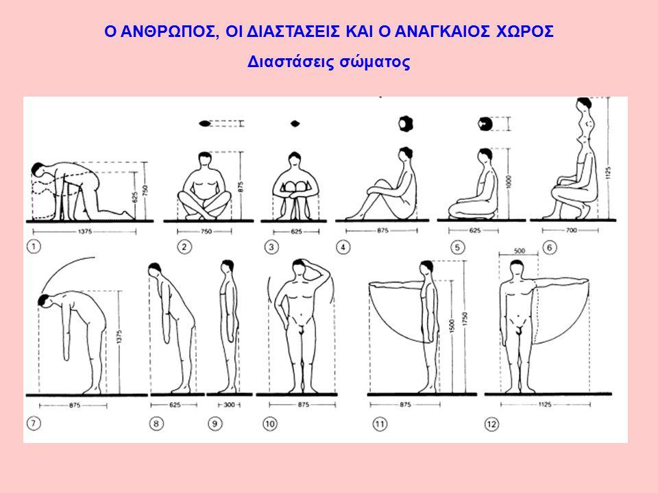 Ο ΑΝΘΡΩΠΟΣ, ΟΙ ΔΙΑΣΤΑΣΕΙΣ ΚΑΙ Ο ΑΝΑΓΚΑΙΟΣ ΧΩΡΟΣ Διαστάσεις σώματος