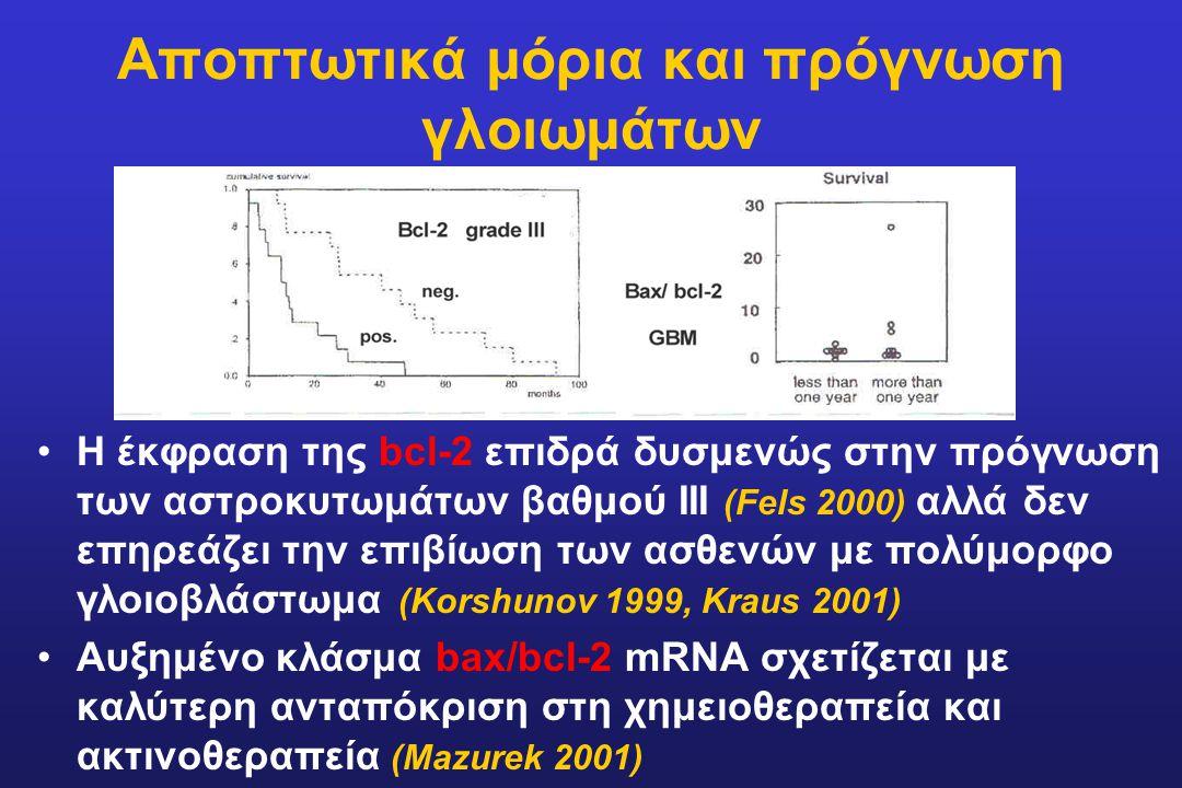 Αποπτωτικά μόρια και πρόγνωση γλοιωμάτων Η έκφραση της bcl-2 επιδρά δυσμενώς στην πρόγνωση των αστροκυτωμάτων βαθμού ΙΙΙ (Fels 2000) αλλά δεν επηρεάζε