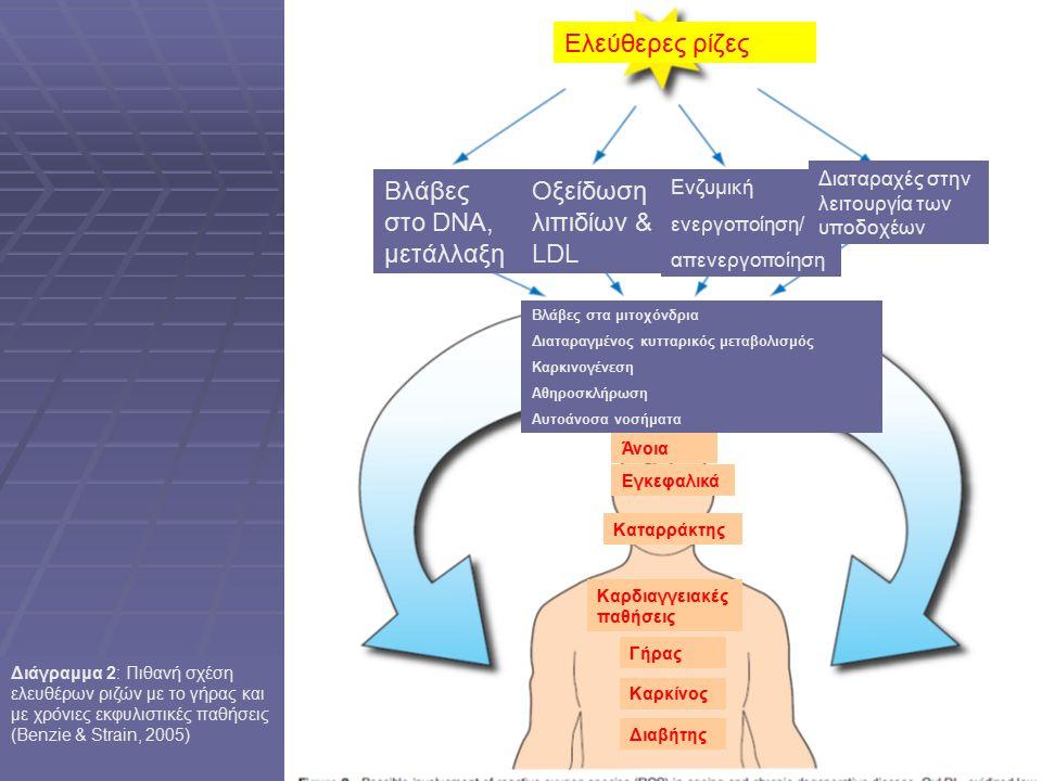 Διαβήτης Καρκίνος Γήρας Καρδιαγγειακές παθήσεις Εγκεφαλικά Καταρράκτης Άνοια Ελεύθερες ρίζες Βλάβες στα μιτοχόνδρια Διαταραγμένος κυτταρικός μεταβολισμός Καρκινογένεση Αθηροσκλήρωση Αυτοάνοσα νοσήματα Βλάβες στο DNA, μετάλλαξη Οξείδωση λιπιδίων & LDL Ενζυμική ενεργοποίηση/ απενεργοποίηση Διαταραχές στην λειτουργία των υποδοχέων Διάγραμμα 2: Πιθανή σχέση ελευθέρων ριζών με το γήρας και με χρόνιες εκφυλιστικές παθήσεις (Benzie & Strain, 2005)