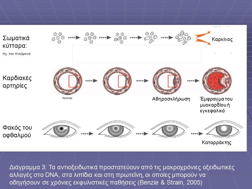 Σωματικά κύτταρα: πχ.