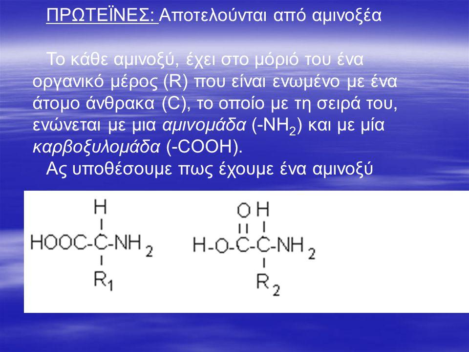 ΠΡΩΤΕΪΝΕΣ: Αποτελούνται από αμινοξέα Το κάθε αμινοξύ, έχει στο μόριό του ένα οργανικό μέρος (R) που είναι ενωμένο με ένα άτομο άνθρακα (C), το οποίο με τη σειρά του, ενώνεται με μια αμινομάδα (-ΝΗ 2 ) και με μία καρβοξυλομάδα (-COOH).