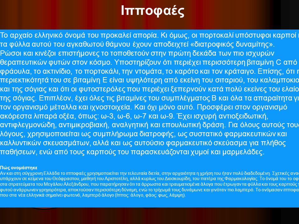 Ιπποφαές Το αρχαίο ελληνικό όνομά του προκαλεί απορία. Κι όμως, οι πορτοκαλί υπόστυφοι καρποί και τα φύλλα αυτού του αγκαθωτού θάμνου έχουν αποδειχτεί