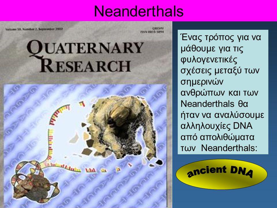 Ένας τρόπος για να μάθουμε για τις φυλογενετικές σχέσεις μεταξύ των σημερινών ανθρώπων και των Neanderthals θα ήταν να αναλύσουμε αλληλουχίες DNA από