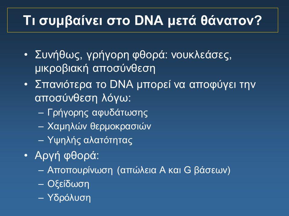 Τι συμβαίνει στο DNA μετά θάνατον? Συνήθως, γρήγορη φθορά: νουκλεάσες, μικροβιακή αποσύνθεση Σπανιότερα το DNA μπορεί να αποφύγει την αποσύνθεση λόγω: