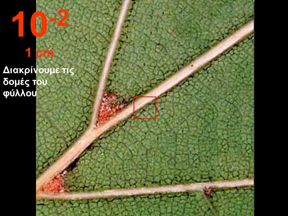 Διακρίνουμε τις λεπτομέρειες ενός φύλλου. 10 -1 10 cm