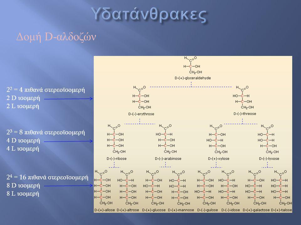 Δομή D-αλδοζών 2 4 = 16 πιθανά στερεοϊσομερή 8 D ισομερή 8 L ισομερή 2 3 = 8 πιθανά στερεοϊσομερή 4 D ισομερή 4 L ισομερή 2 2 = 4 πιθανά στερεοϊσομερή