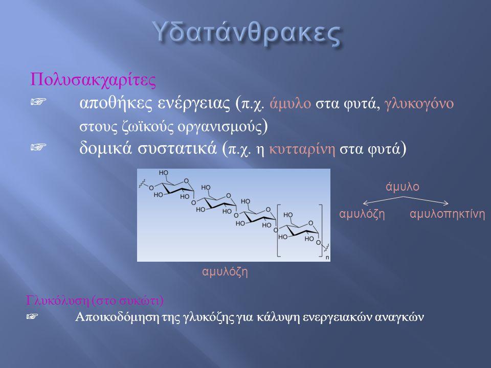 Πολυσακχαρίτες ☞ αποθήκες ενέργειας ( π. χ. άμυλο στα φυτά, γλυκογόνο στους ζωϊκούς οργανισμούς ) ☞ δομικά συστατικά ( π. χ. η κυτταρίνη στα φυτά ) Γλ