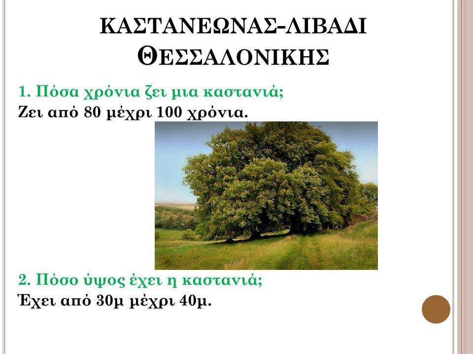 ΚΑΣΤΑΝΕΩΝΑΣ - ΛΙΒΑΔΙ Θ ΕΣΣΑΛΟΝΙΚΗΣ 1. Πόσα χρόνια ζει μια καστανιά; Ζει από 80 μέχρι 100 χρόνια. 2. Πόσο ύψος έχει η καστανιά; Έχει από 30μ μέχρι 40μ.