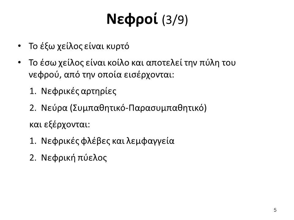 Νεφροί (4/9) Καλύμματα Νεφρού: Περιτόναιο (μπροστά) Νεφρική Περιτονία (κάτω από το περιτόναιο) σχηματίζει 2 πέταλα το πρόσθιο (περιτονία του Zuckerkandl) και το οπίσθιο (πέταλο του Toldt), τα οποία περιβάλλουν το νεφρό.