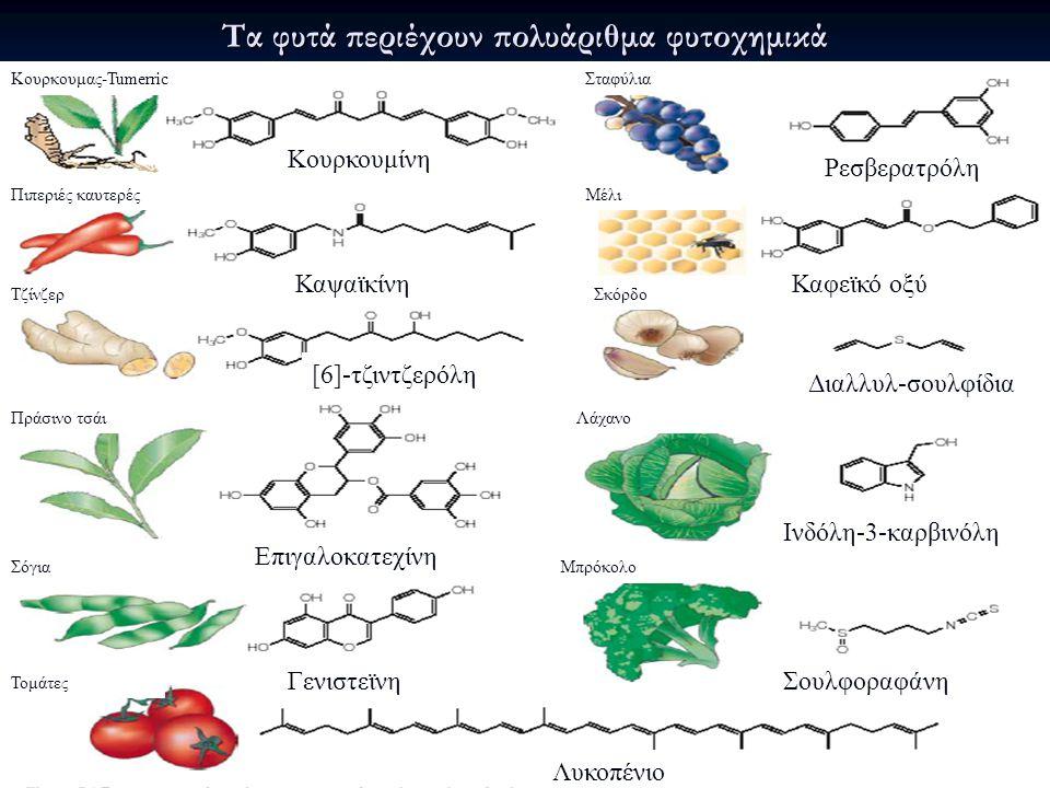Τα φυτά περιέχουν πολυάριθμα φυτοχημικά Λυκοπένιο Ρεσβερατρόλη Καφεϊκό οξύ Σταφύλια Μέλι Σκόρδο Λάχανο Μπρόκολο Τομάτες Σόγια Πράσινο τσάι Τζίνζερ Πιπεριές καυτερές Κουρκουμας-Tumerric ΓενιστεϊνηΣουλφοραφάνη Ινδόλη-3-καρβινόλη Διαλλυλ-σουλφίδια Καψαϊκίνη [6]-τζιντζερόλη Κουρκουμίνη Επιγαλοκατεχίνη
