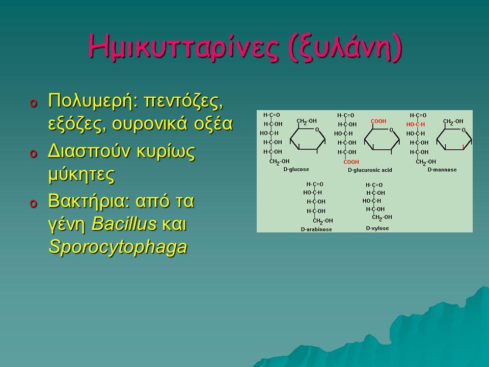Ημικυτταρίνες (ξυλάνη) o Πολυμερή: πεντόζες, εξόζες, ουρονικά οξέα o Διασπούν κυρίως μύκητες o Βακτήρια: από τα γένη Bacillus και Sporocytophaga