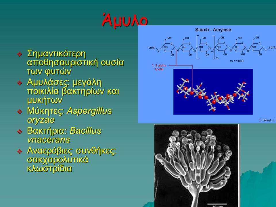 Άμυλο  Σημαντικότερη αποθησαυριστική ουσία των φυτών  Αμυλάσες: μεγάλη ποικιλία βακτηρίων και μυκήτων  Μύκητες: Aspergillus oryzae  Βακτήρια: Bacillus vnacerans  Αναερόβιες συνθήκες: σακχαρολυτικά κλωστρίδια