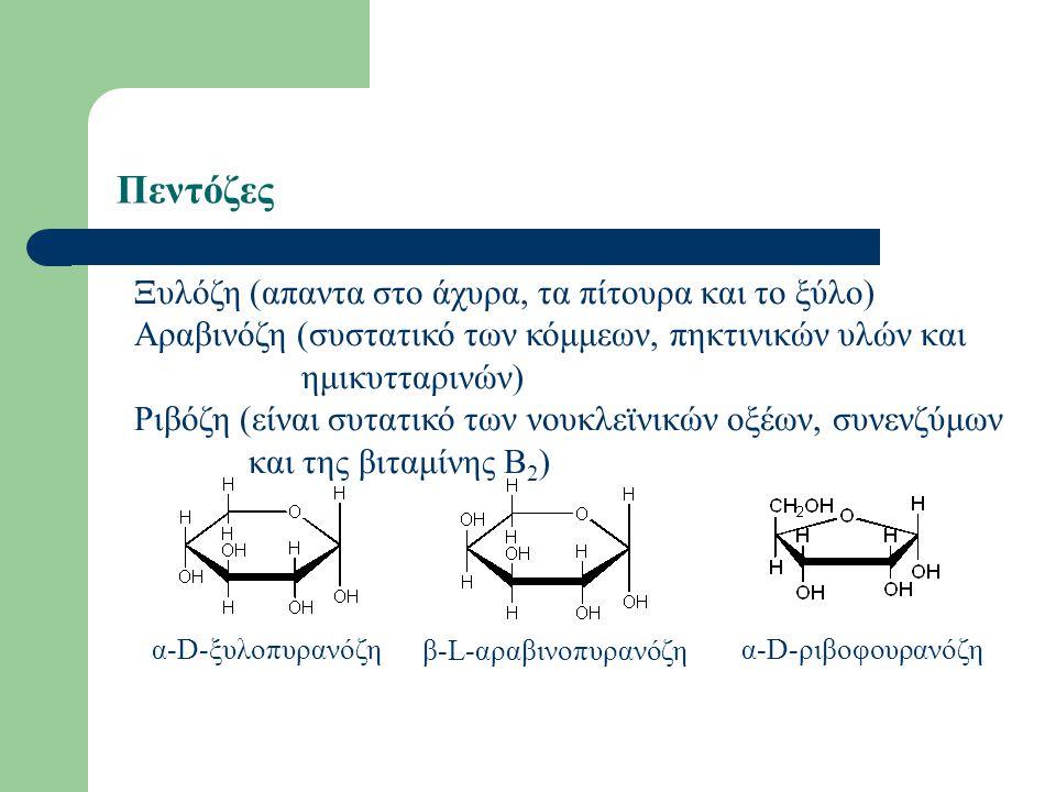 Πεντόζες Ξυλόζη (απαντα στο άχυρα, τα πίτουρα και το ξύλο) Αραβινόζη (συστατικό των κόμμεων, πηκτινικών υλών και ημικυτταρινών) Ριβόζη (είναι συτατικό των νουκλεϊνικών οξέων, συνενζύμων και της βιταμίνης Β 2 ) α-D-ξυλοπυρανόζη β-L-αραβινοπυρανόζη α-D-ριβοφουρανόζη