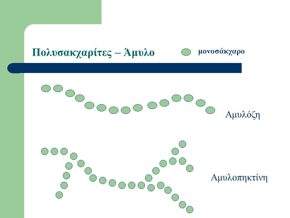 Πολυσακχαρίτες – Άμυλο Αμυλόζη Αμυλοπηκτίνη μονοσάκχαρο